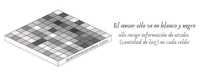 Demosaicing - El sensor sólo ve intensidad, no colores